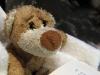 Pension \'Hinz und Kunz\' in Weimar: abends lesen wir alle sehr gern
