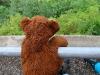Der Bürgenstock ist eine wahre Herausforderung für mutige Bären! Soooo hoch !!!