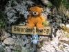 Die Bären haben auf dem Rigi sogar eigene Wege!