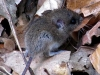 Dieses kleine Mäuschen huschte über unseren Weg und blieb recht lange still sitzen, damit Günter und ich sie fotografieren konnten