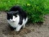 Im Dorf brauchen die Katzen kein Katzenklo ... wenn doch bloss nur die Paparazzi schneller verschwunden wären