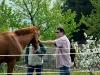 Mein persönlicher Pferdeflüsterer, ich schau mir diese Tiere lieber aus der Ferne an
