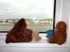 In Göteborg haben wir eine Kajüte auf dem Hotelschiff als Schlafplatz gehabt. Mit Blick aufs Wasser! Allerdings gab es auch zu viel Wasser vom Himmel, darum blieben alle Bären lieber im Zimmer ...