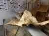 Im Fischmarkt Ravnkloa in Trondheim entdeckte Heini einen riesigen Stockfisch