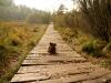 Ein Bär auf dem Holzweg.