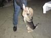 Dieser Hund gehörte zum Hotel und hatte zwei Namen, auf die er fröhlich reagierte: 'Schorik', eine liebevolle Verniedlichung von Obschora (zu deutsch: Freßsack) und 'Durik', was man am besten wohl mit Dümmchen übersetzt. War aber ein ganz, ganz lieber!