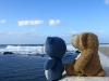 Es dauerte nicht lange und wir beide waren von dem großen Wasser hin und weg! Manchmal hatte der Ozean sogar die Farbe von Dinkis Fell!