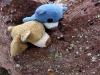 Wir fanden auf manchen Felsen irgendwas, was wir nicht kannten. Wir fragen Mama und sie nannte sie Flechten. Dinki und ich haben sehr lange beobachtet, abär sie waren faul und haben gar nix geflochten!