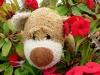Ich entdeckte schöne, rote Blumen und weil Rot die Farbe der Liebe ist, musste ich natürlich sofort an meine Ines denken ...