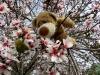 Ich mochte diese Blumen auch sehr! Und es gab davon so viele! Da gibt es später bestimmt eine ganze Menge Nüsse zu knacken!