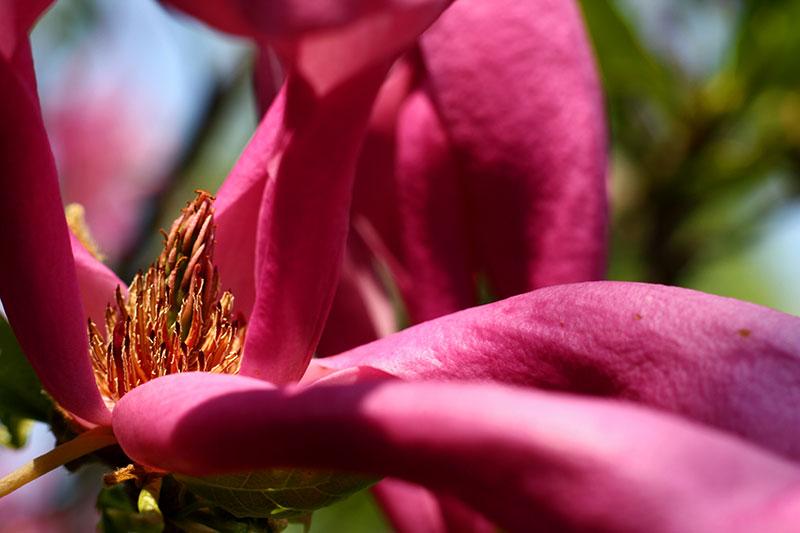 Frühling-im-Garten